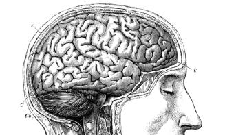Brain antomy, 19th century artwork